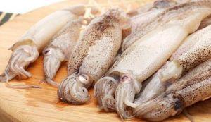squid-807028